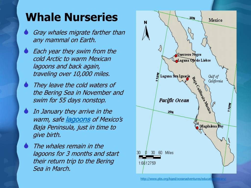 Whale Nurseries