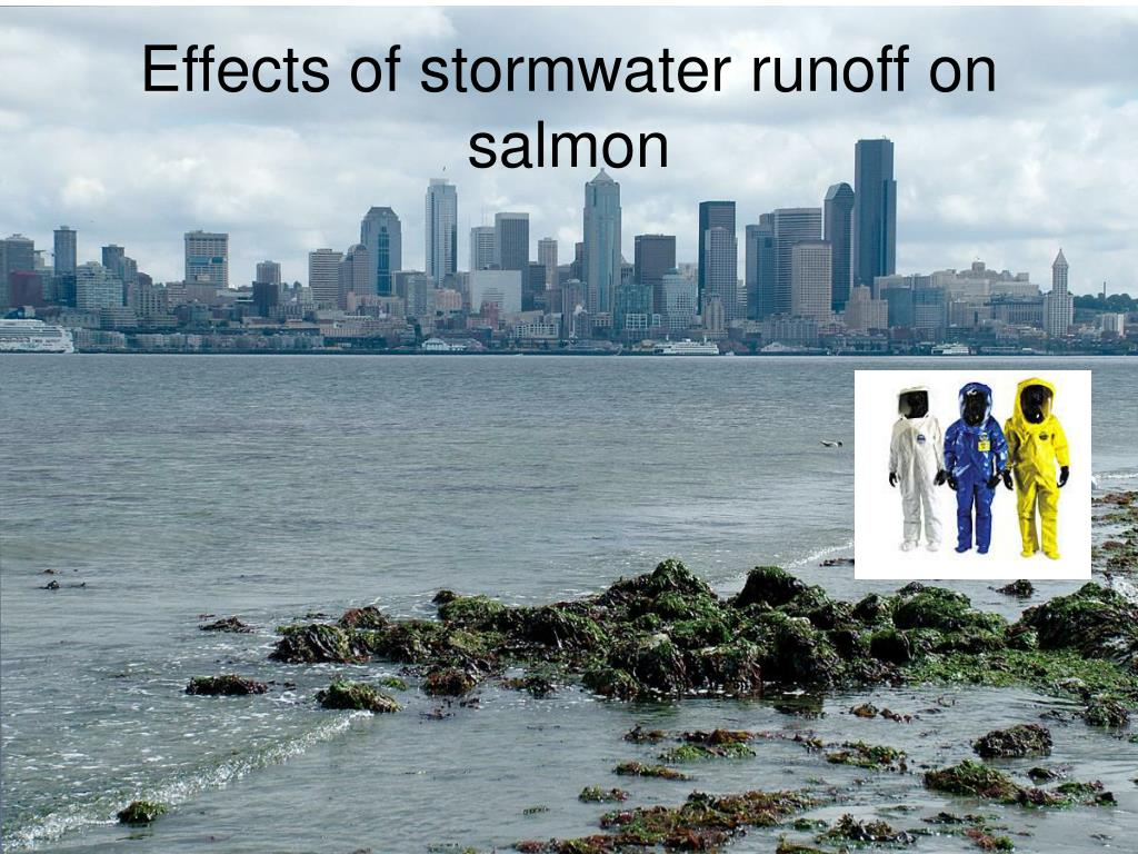 Effects of stormwater runoff on salmon