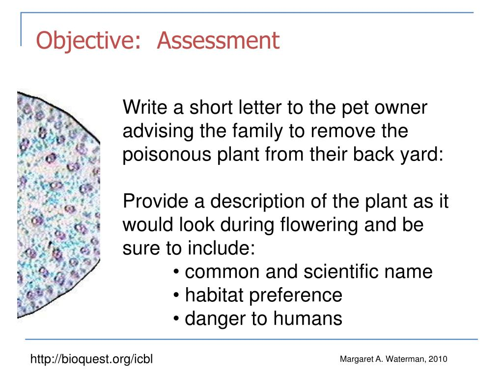 Objective:  Assessment