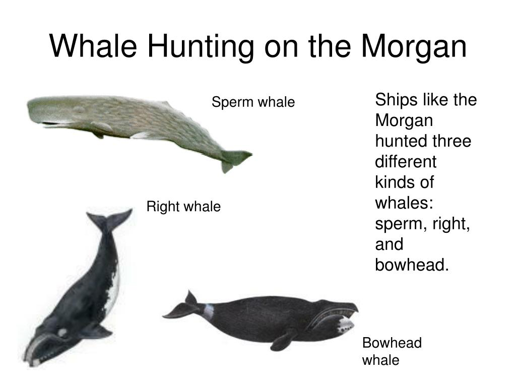 Whale Hunting on the Morgan