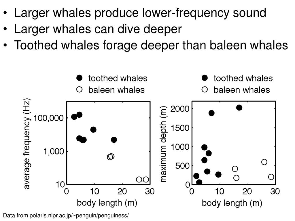 Larger whales produce lower-frequency sound