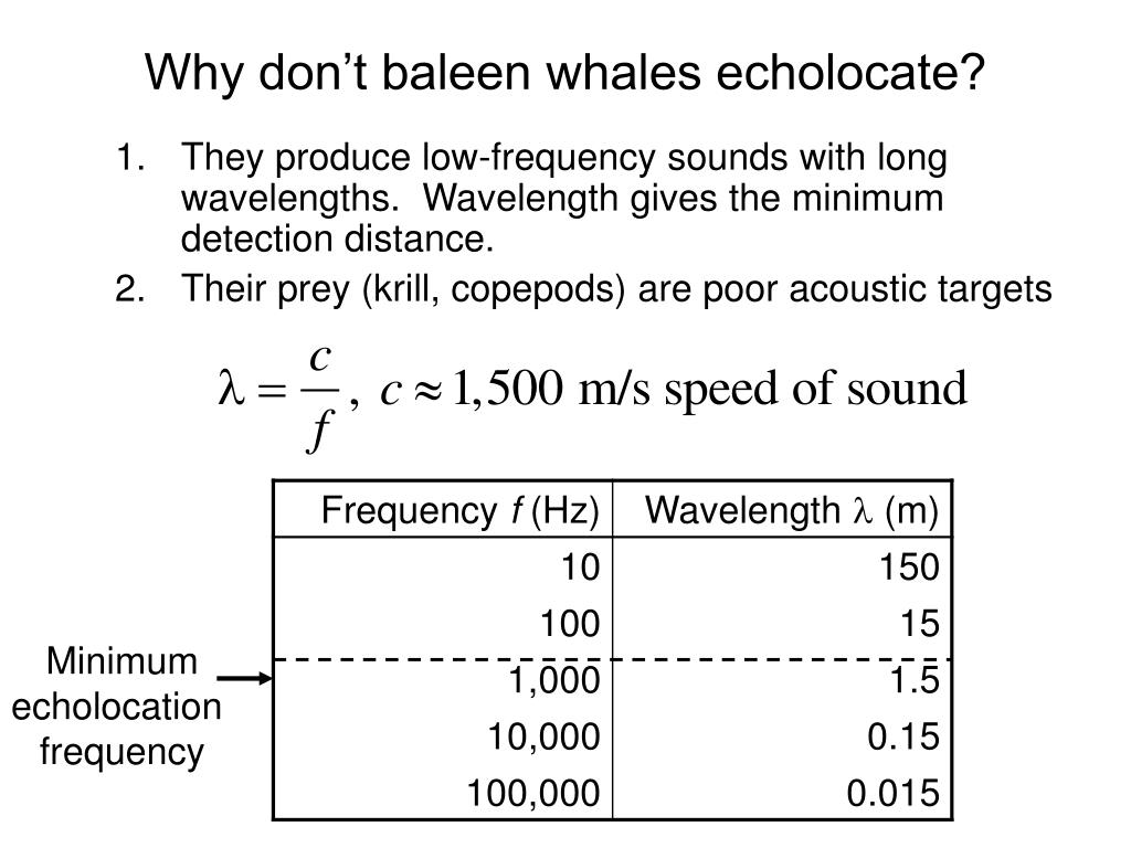 Why don't baleen whales echolocate?