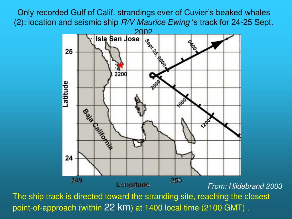 Only recorded Gulf of Calif. strandings ever of Cuvier's beaked whales (2): location and seismic ship