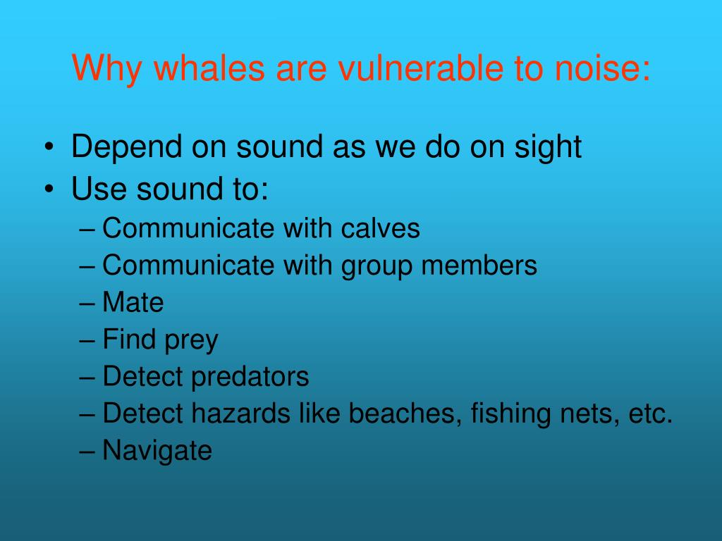 Why whales are vulnerable to noise: