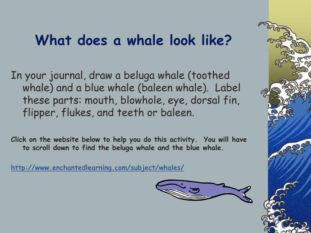 What does a whale look like?