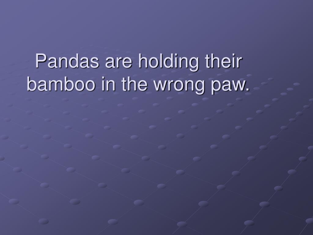 Pandas are holding their bamboo in the wrong paw.
