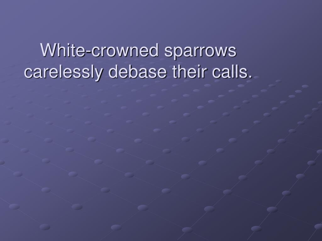 White-crowned sparrows carelessly debase their calls.