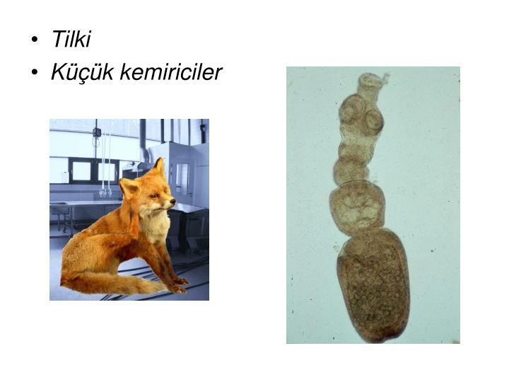 Tilki