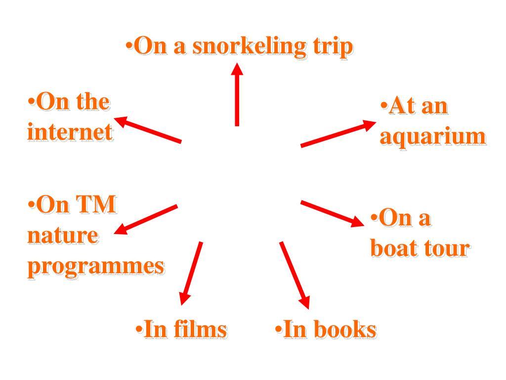 On a snorkeling trip