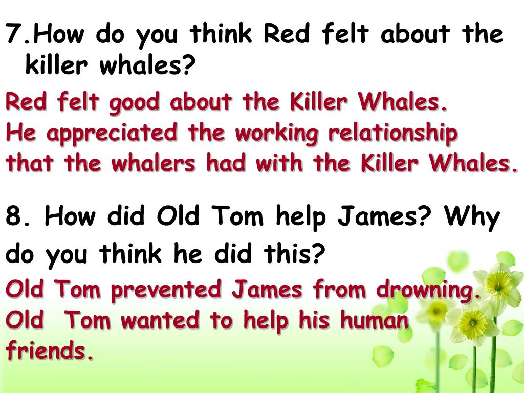 7.How do you think Red felt about the killer whales?