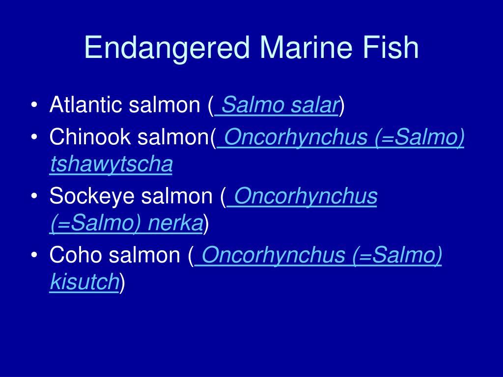 Endangered Marine Fish