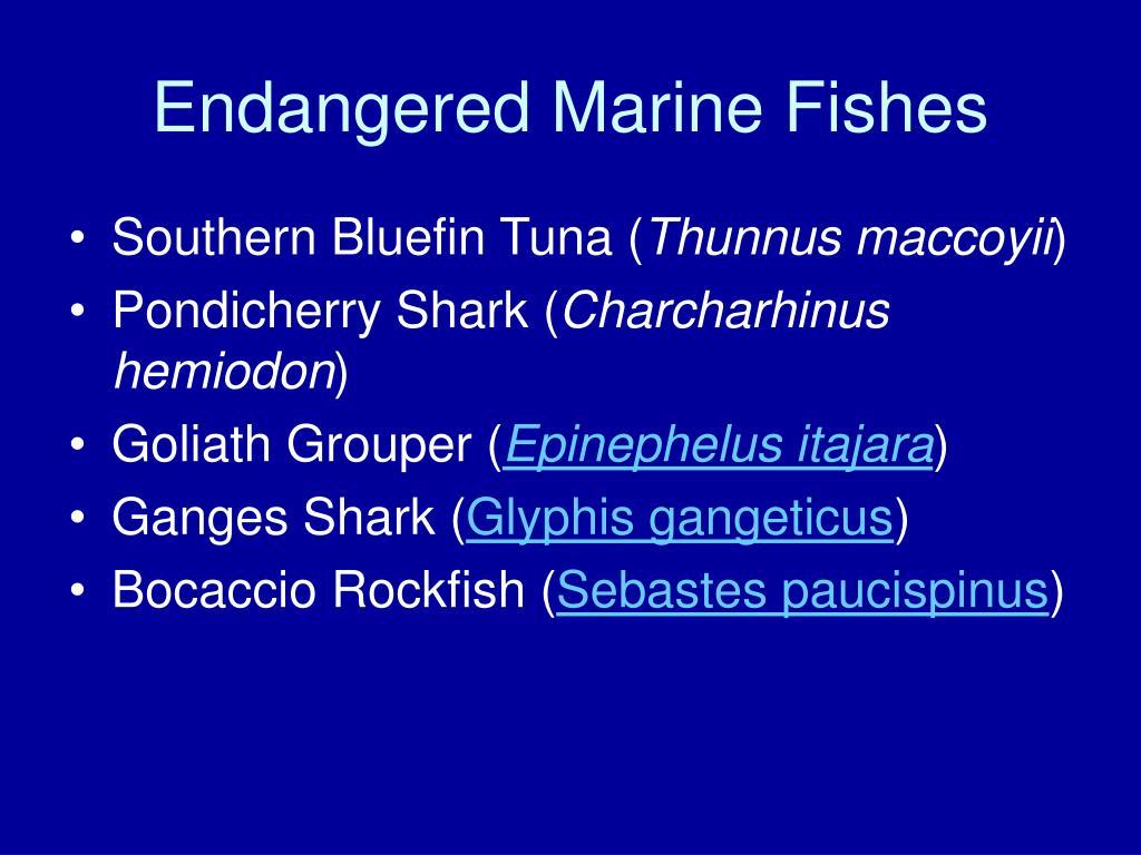Endangered Marine Fishes