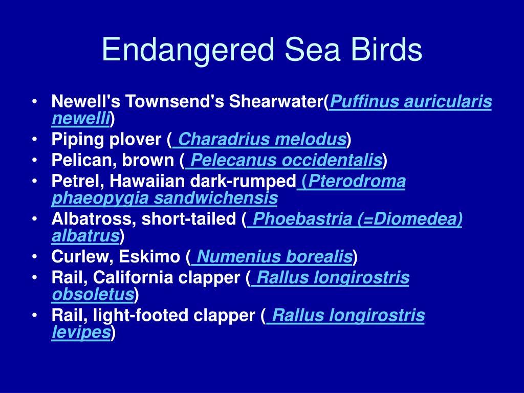 Endangered Sea Birds