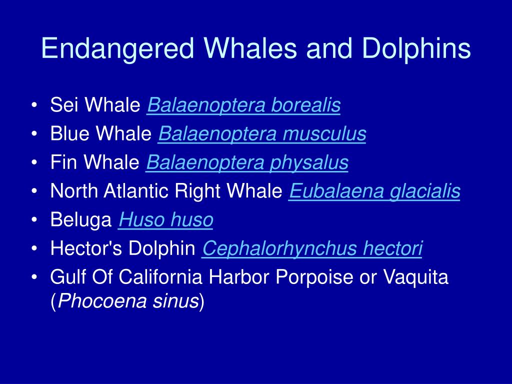 Endangered Whales and Dolphins