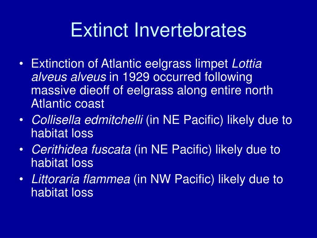 Extinct Invertebrates