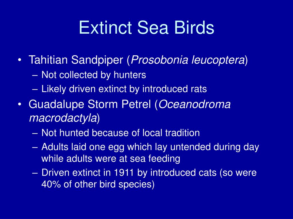 Extinct Sea Birds