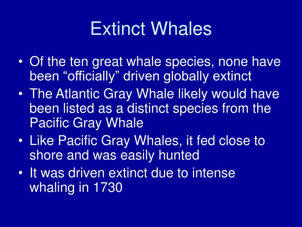 Extinct Whales