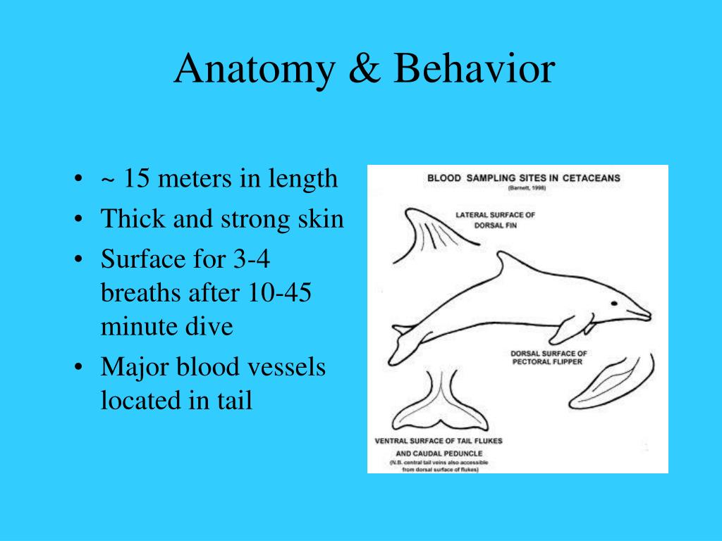 Anatomy & Behavior