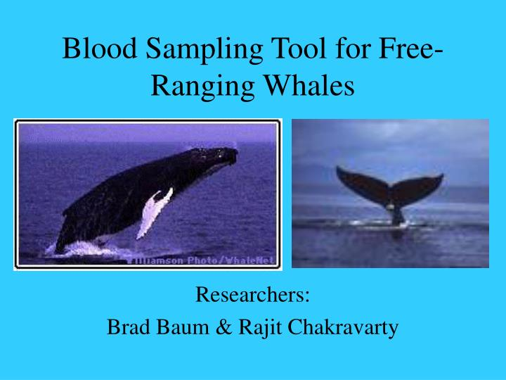 Blood sampling tool for free ranging whales