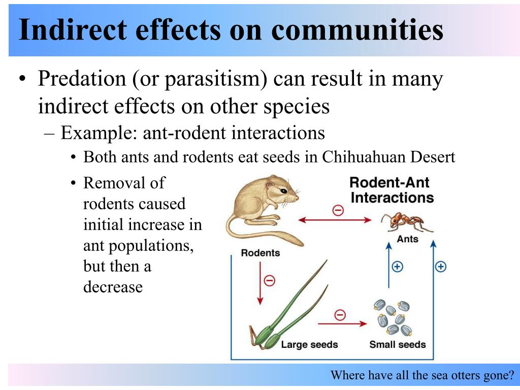 Indirect effects on communities