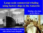 large scale commercial whaling using factory ships in the antarctic