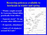 recurring polynyas available to bowheads in winter and spring