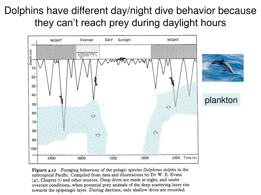 Dolphins have different day/night dive behavior because they can't reach prey during daylight hours