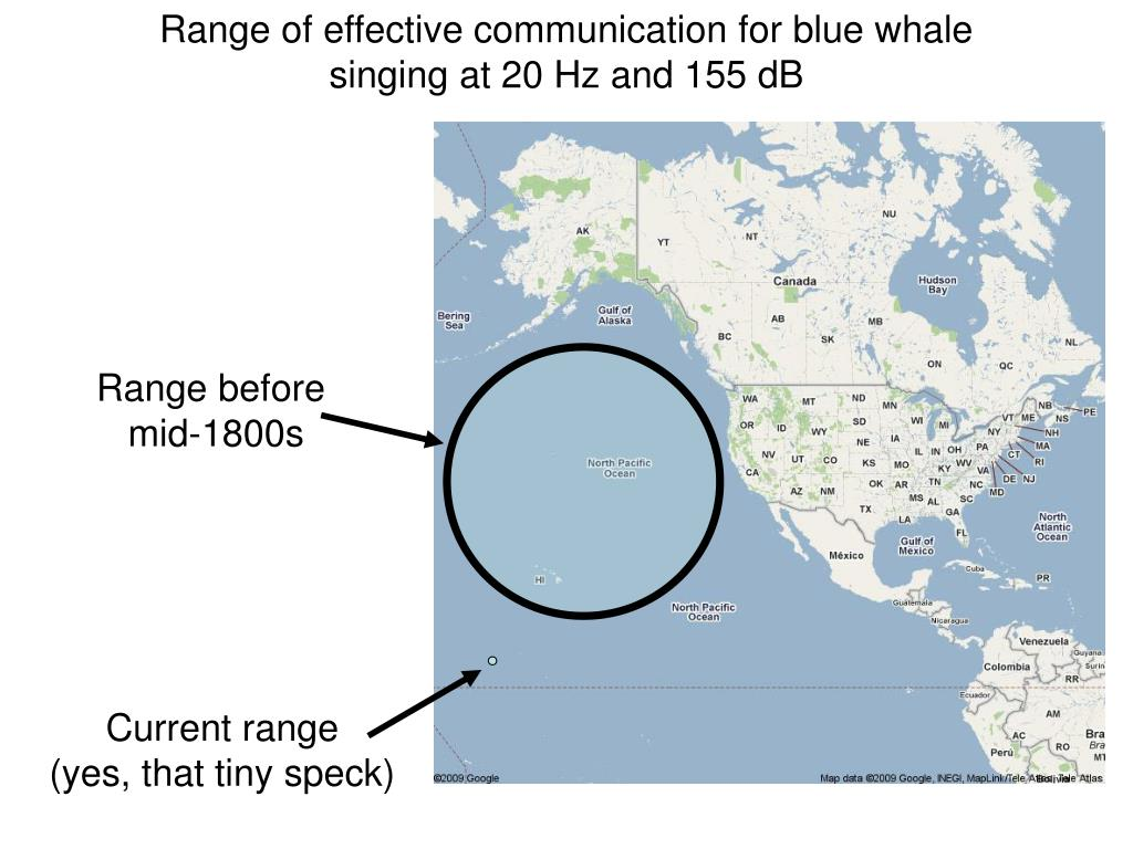 Range of effective communication for blue whale