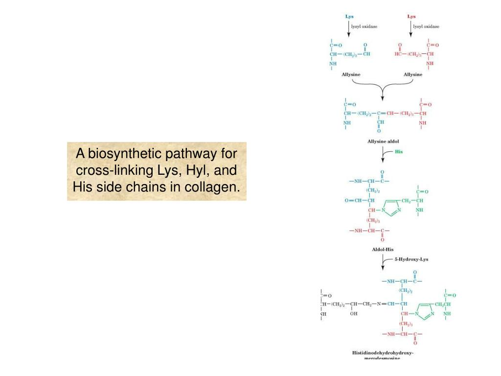 A biosynthetic pathway for