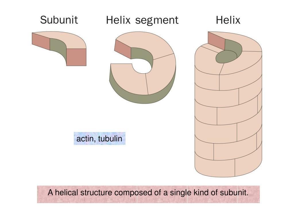 actin, tubulin