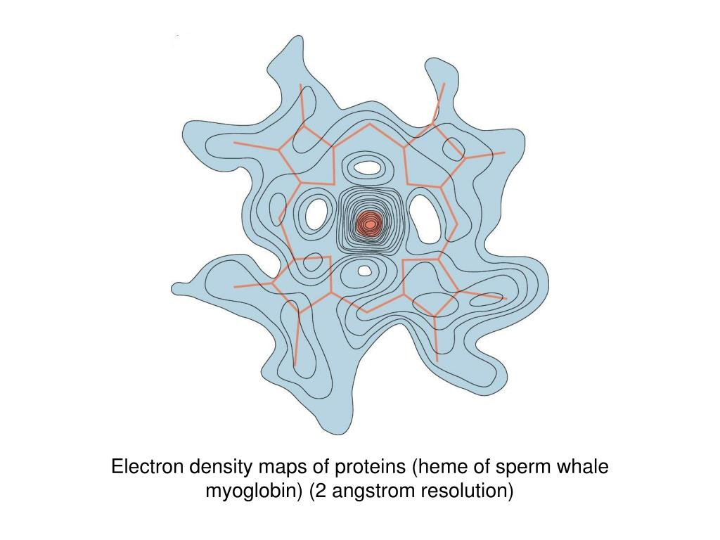 Electron density maps of proteins (heme of sperm whale myoglobin) (2 angstrom resolution)