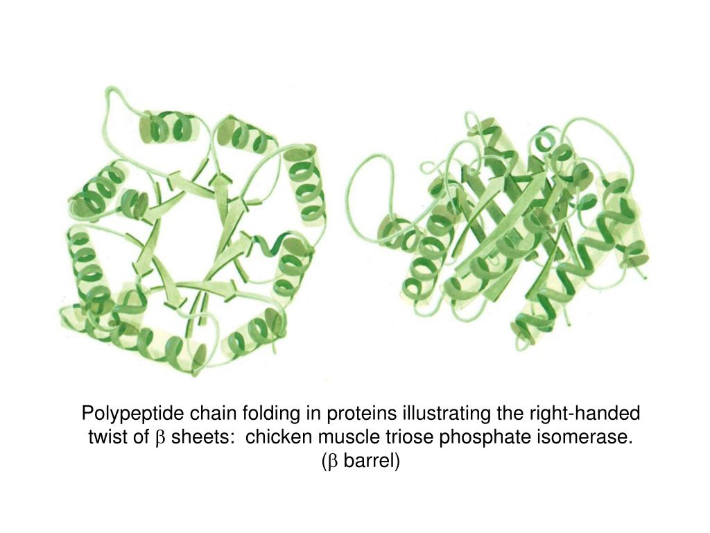 Polypeptide chain folding in proteins illustrating the right-handed twist of