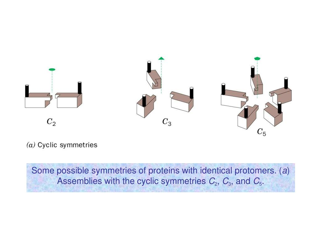 Some possible symmetries of proteins with identical protomers. (