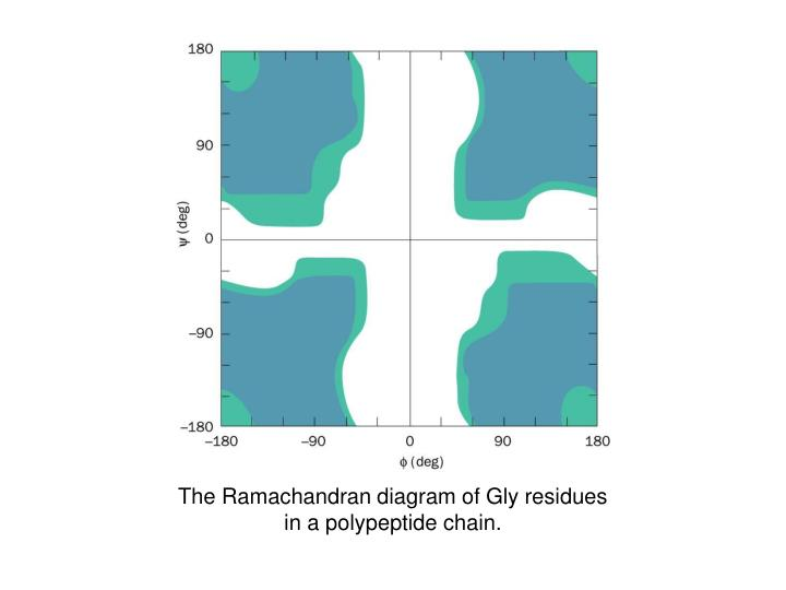The ramachandran diagram of gly residues in a polypeptide chain