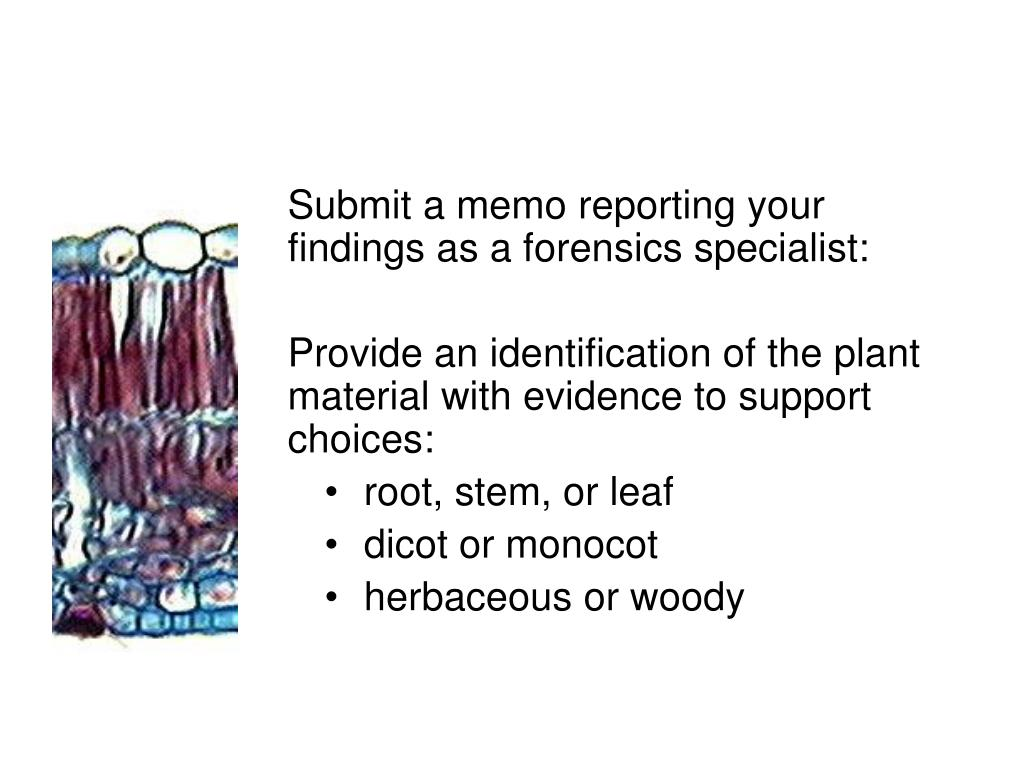 Submit a memo reporting your findings as a forensics specialist: