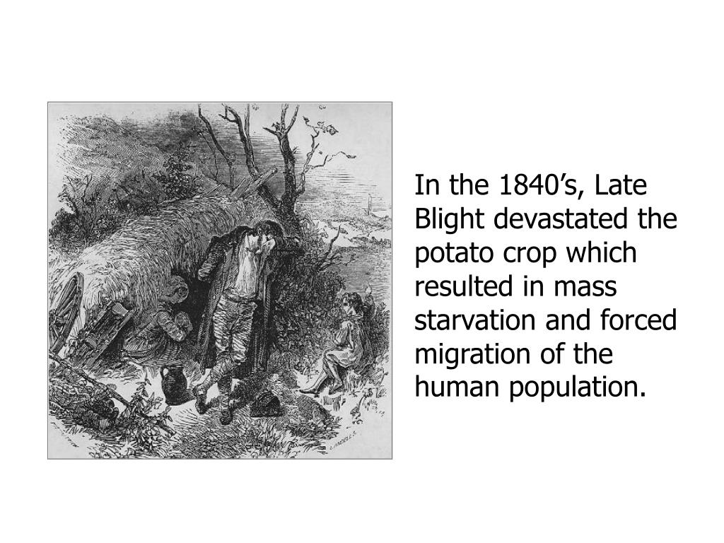 In the 1840's, Late Blight devastated the potato crop which resulted in mass starvation and forced migration of the human population.