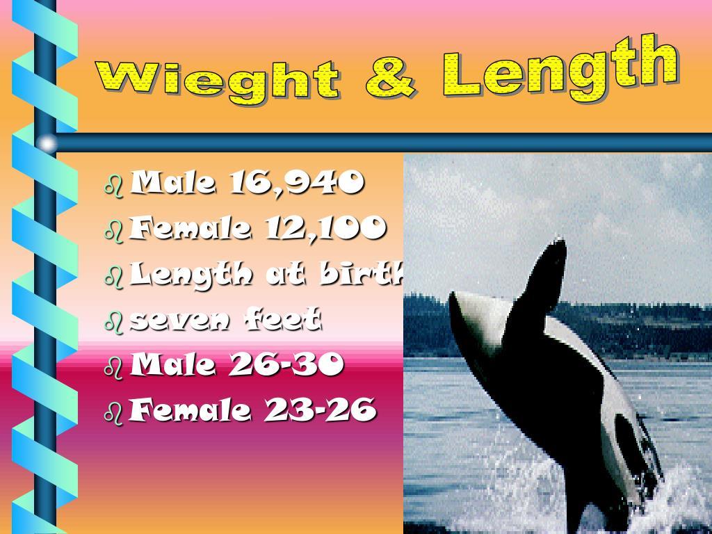 Wieght & Length