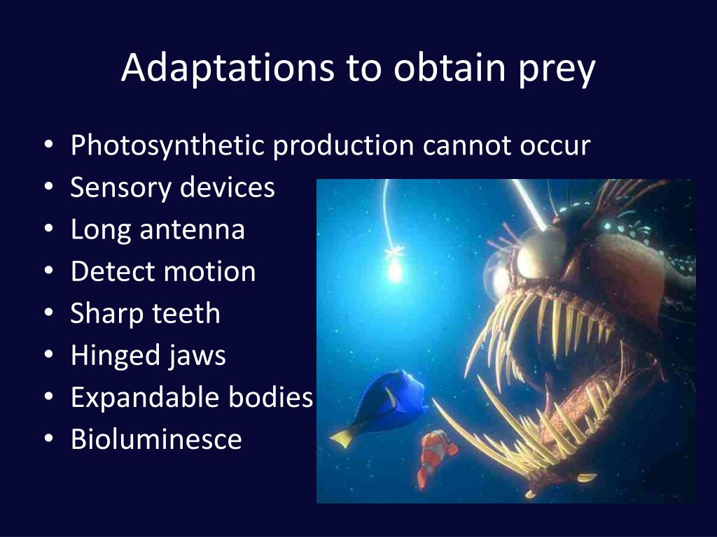 Adaptations to obtain prey
