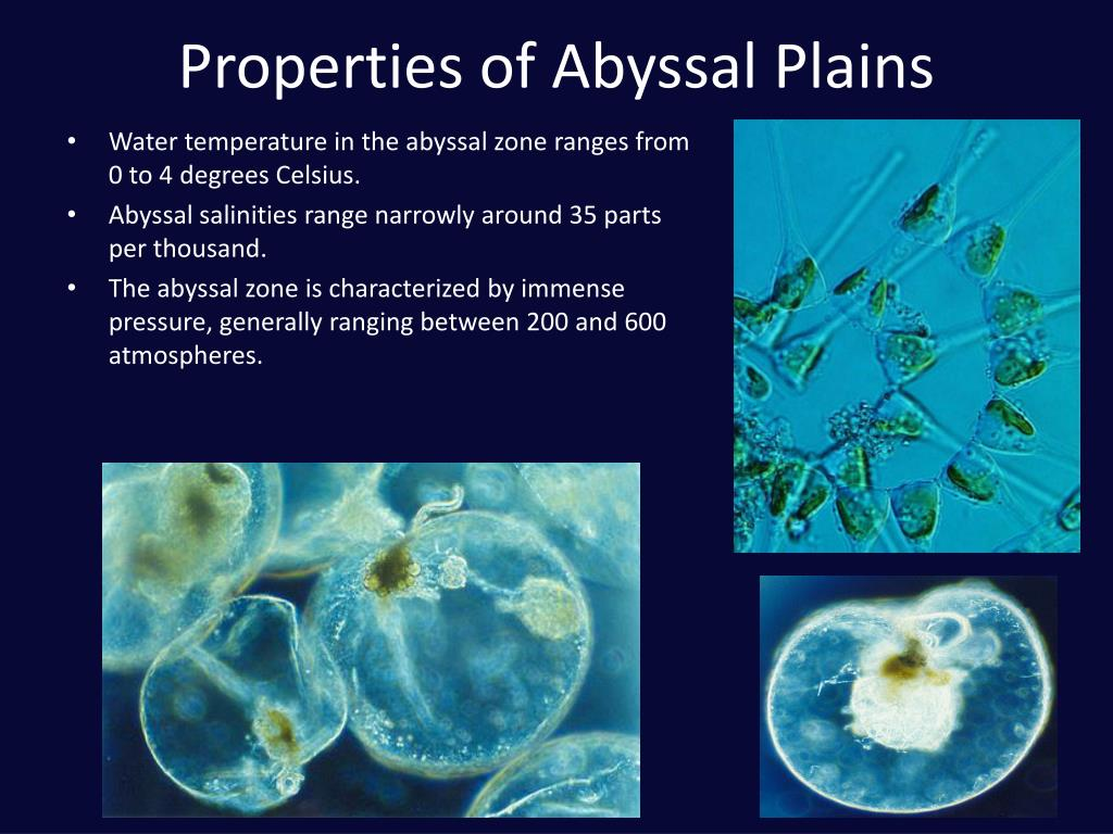 Properties of Abyssal Plains