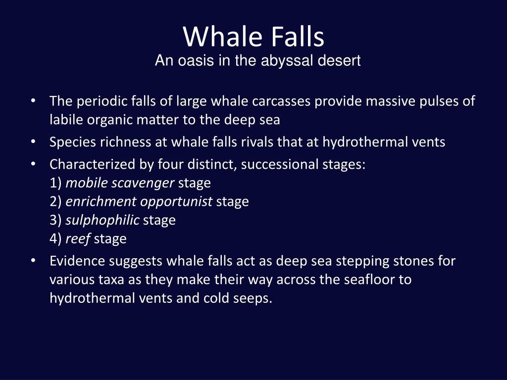 Whale Falls