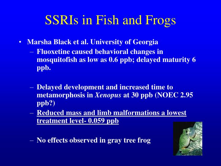 SSRIs in Fish and Frogs