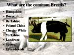 what are the common breeds