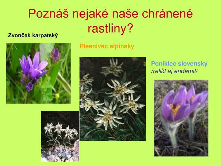 Poznáš nejaké naše chránené rastliny?