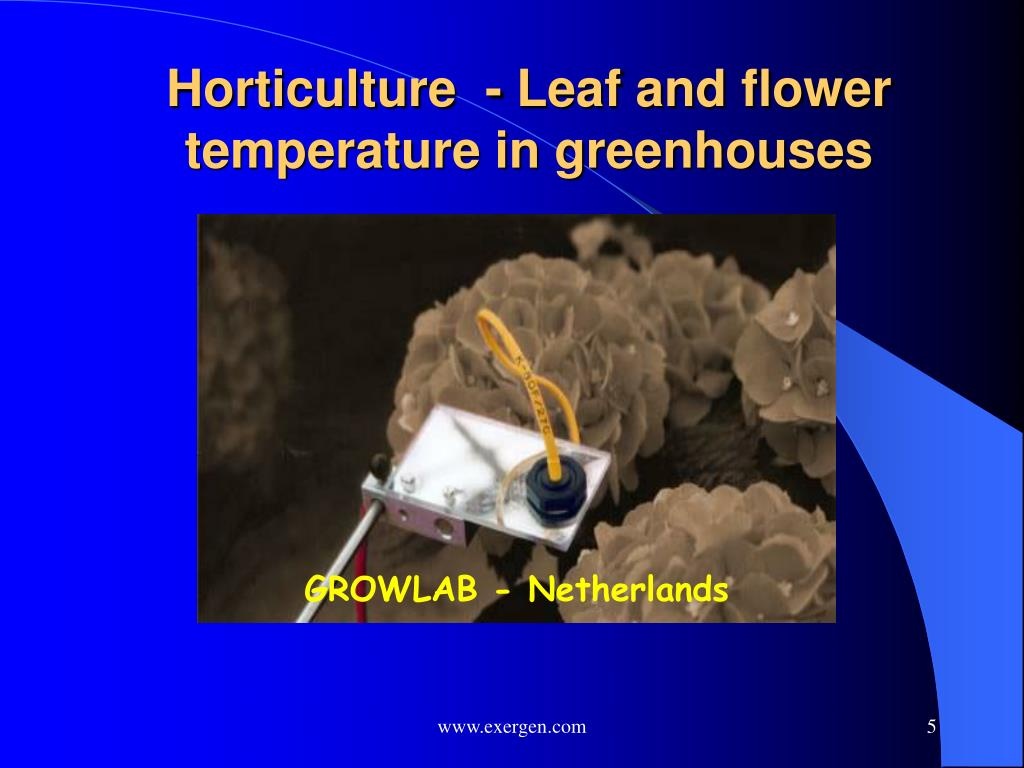 Horticulture  - Leaf and flower temperature in greenhouses