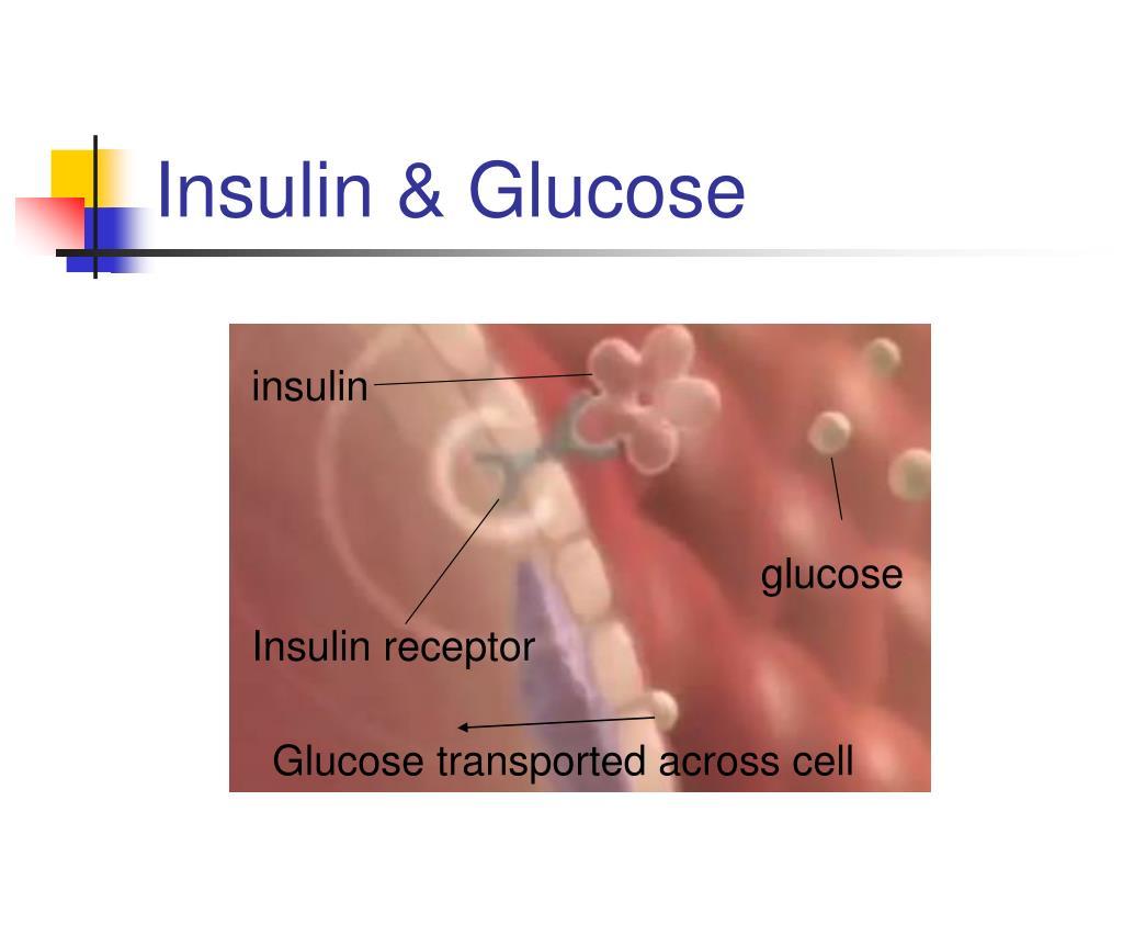 Insulin & Glucose