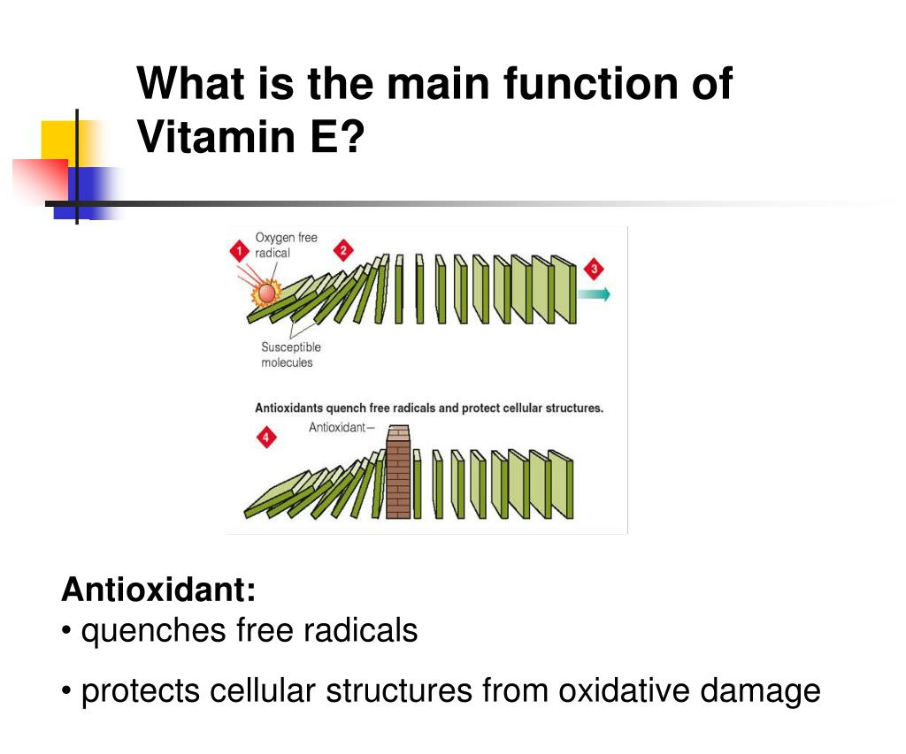 What is the main function of Vitamin E?