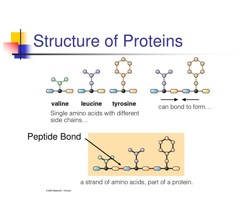 Structure of Proteins