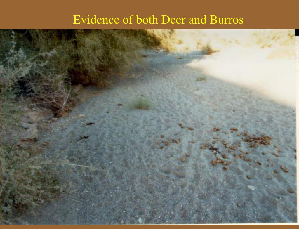 Evidence of both Deer and Burros