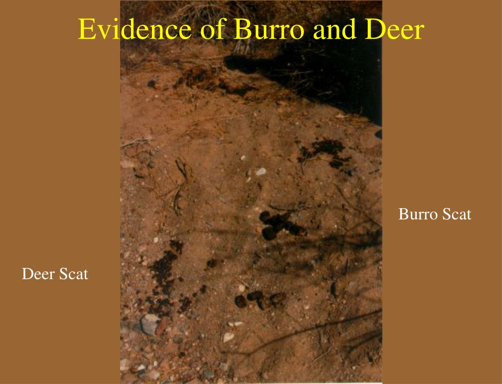 Evidence of Burro and Deer