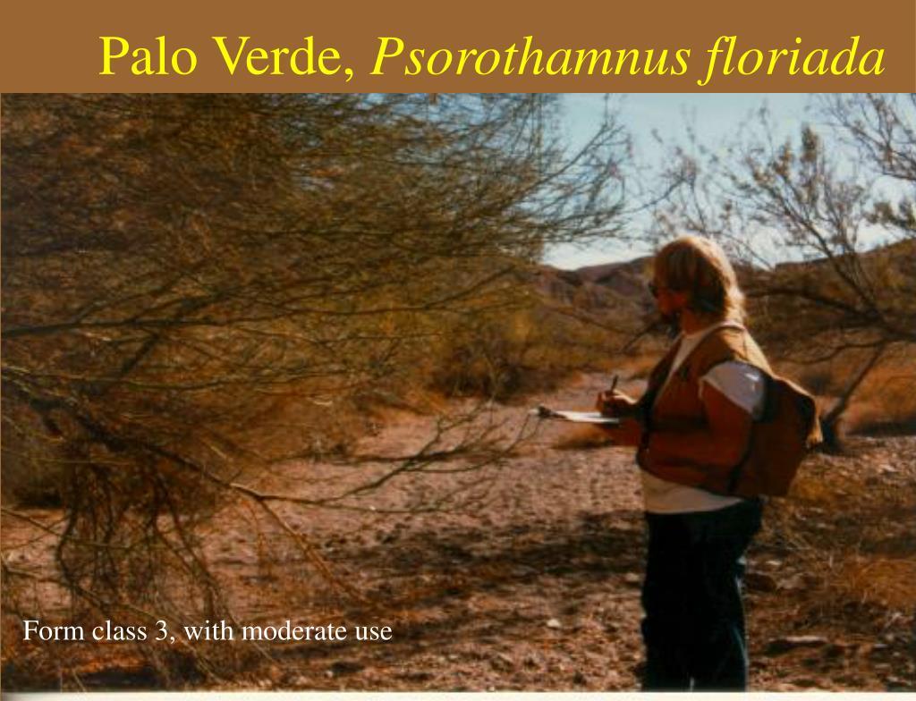 Palo Verde,